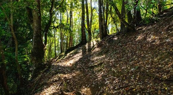 Ruta Mashue (Foto 3)